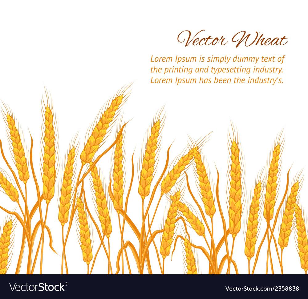 Wheat ear card vector | Price: 1 Credit (USD $1)