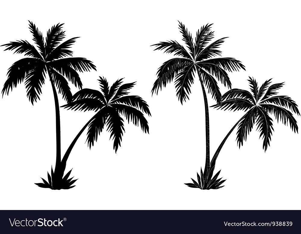 Palm trees black silhouettes vector | Price: 1 Credit (USD $1)