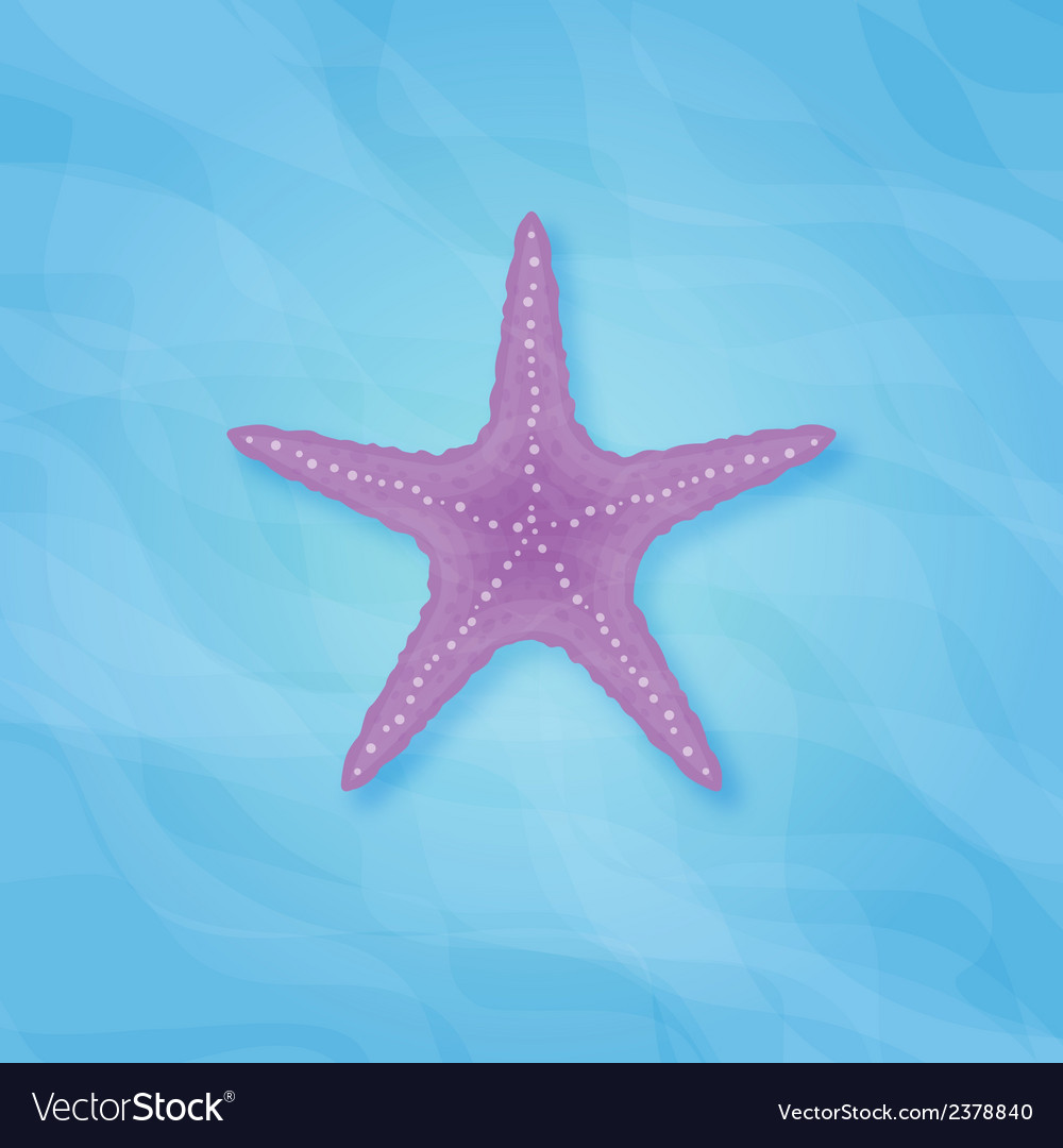 Strafish copy vector | Price: 1 Credit (USD $1)