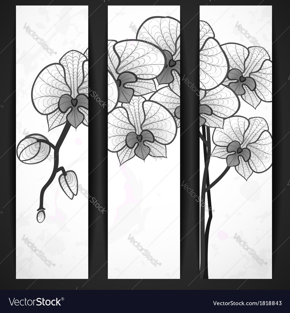 Hand drawing orchid flower vector   Price: 1 Credit (USD $1)