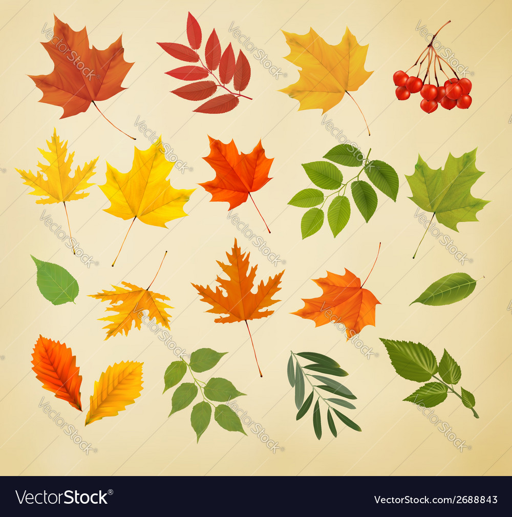 Set of colorful autumn leaves vector | Price: 1 Credit (USD $1)