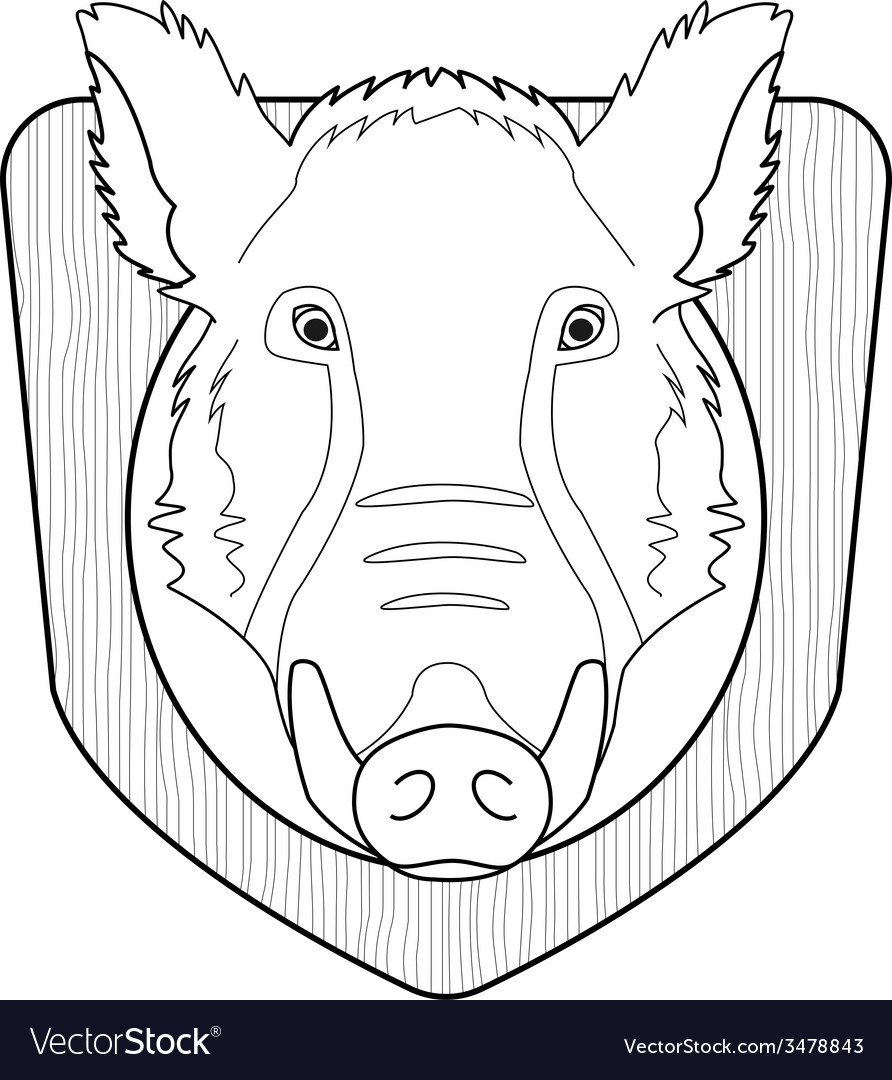 Stuffed taxidermy wild boar head line-art vector | Price: 1 Credit (USD $1)
