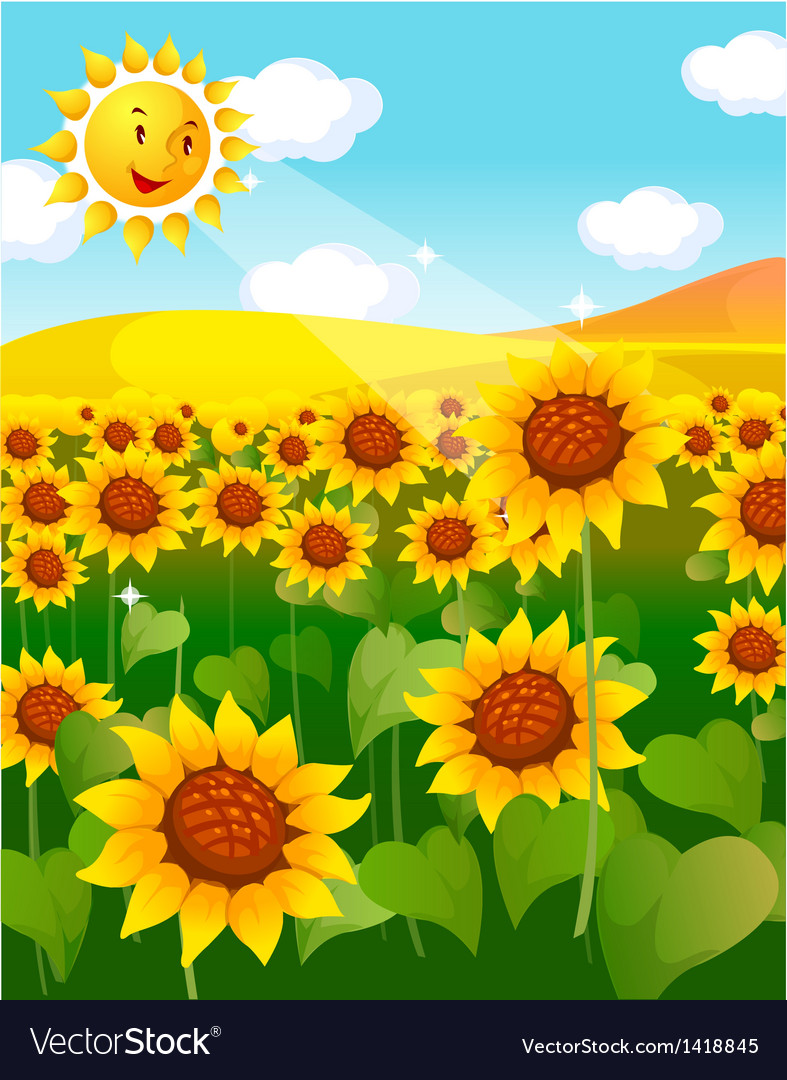 Sunflower field and sun vector | Price: 1 Credit (USD $1)