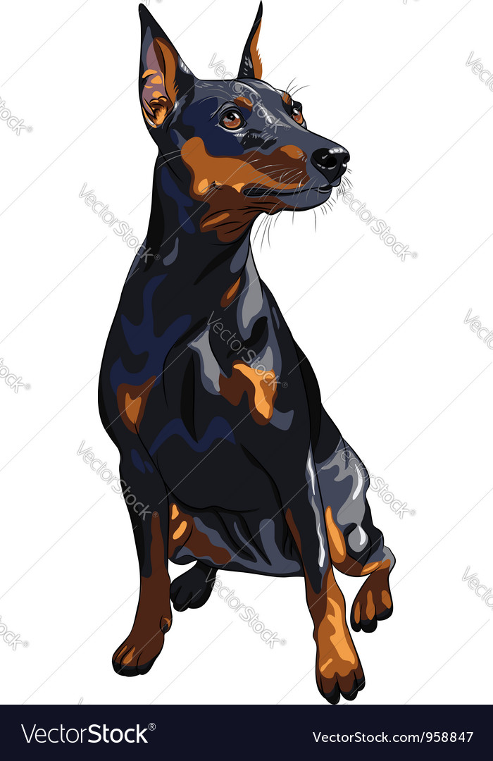 Miniature pinscher vector | Price: 3 Credit (USD $3)