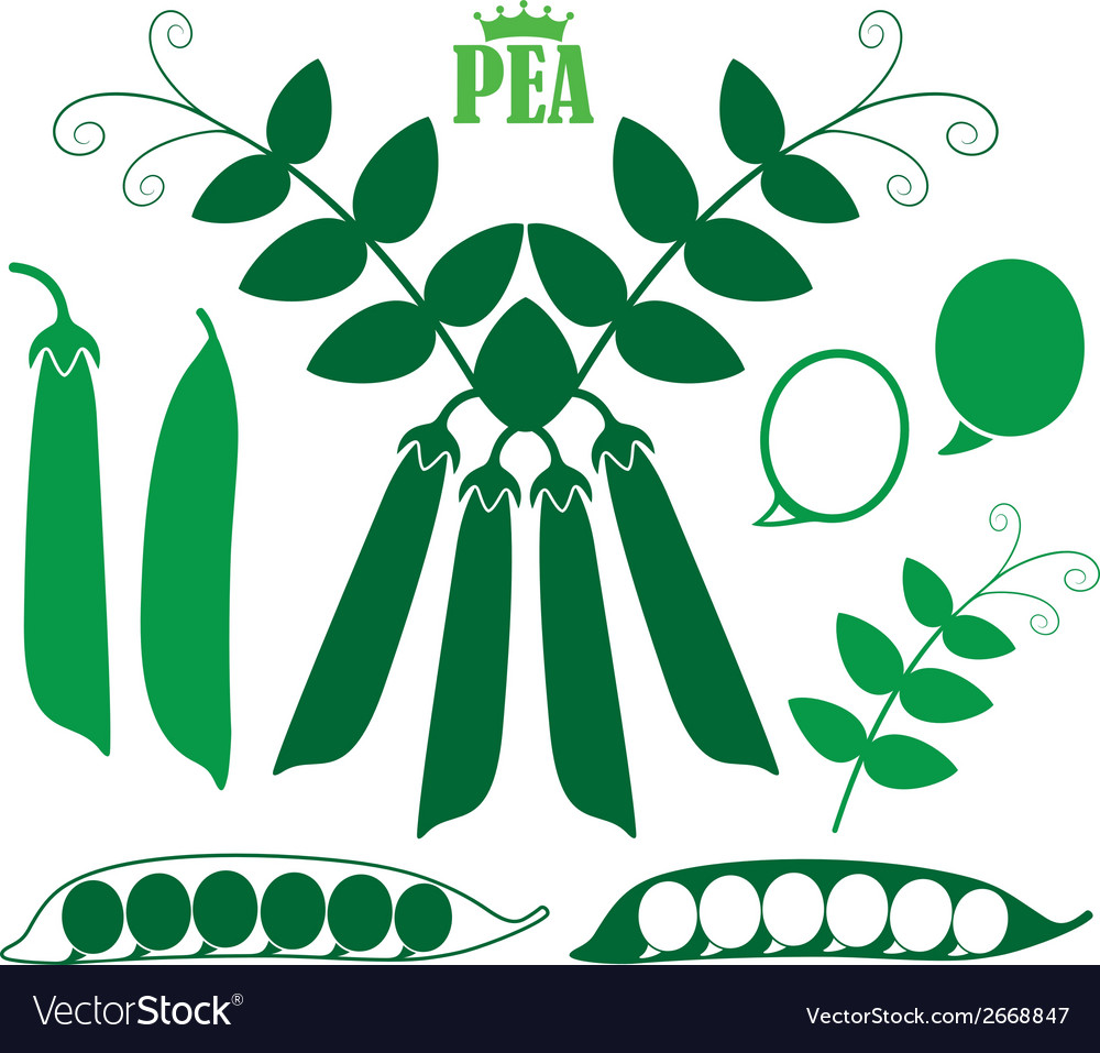 Pea vector | Price: 1 Credit (USD $1)