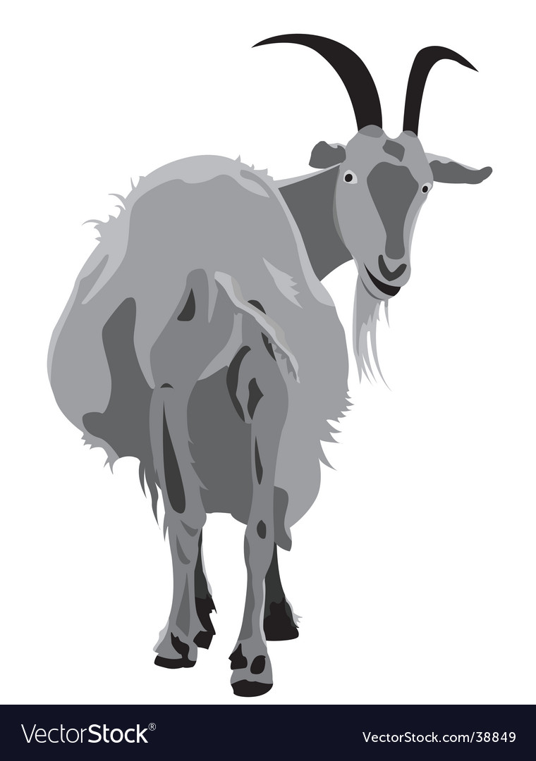 Horned goat vector | Price: 1 Credit (USD $1)