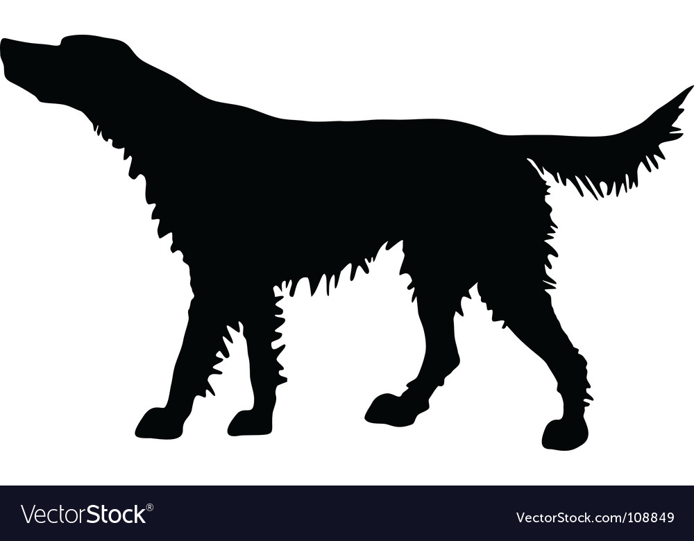 Irish red setter vector | Price: 1 Credit (USD $1)
