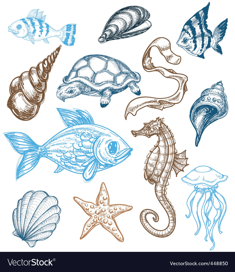 Marine life drawing vector | Price: 1 Credit (USD $1)