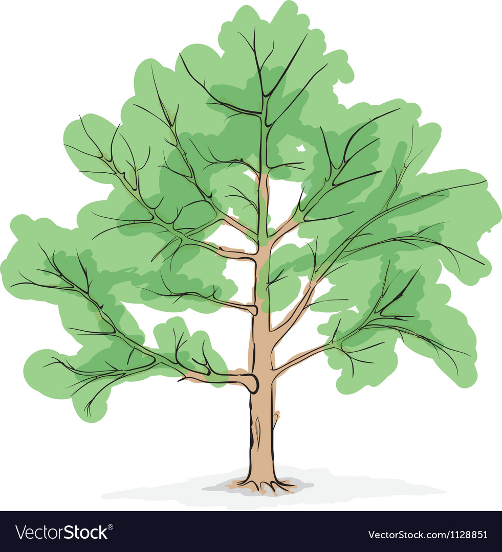 Big tree drawing vector | Price: 1 Credit (USD $1)