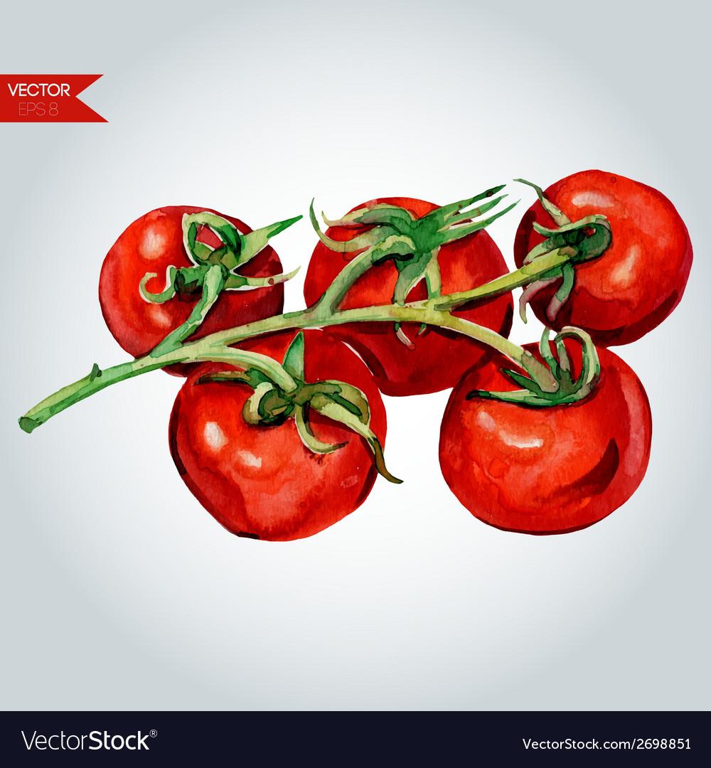 Tomato branch vector   Price: 1 Credit (USD $1)