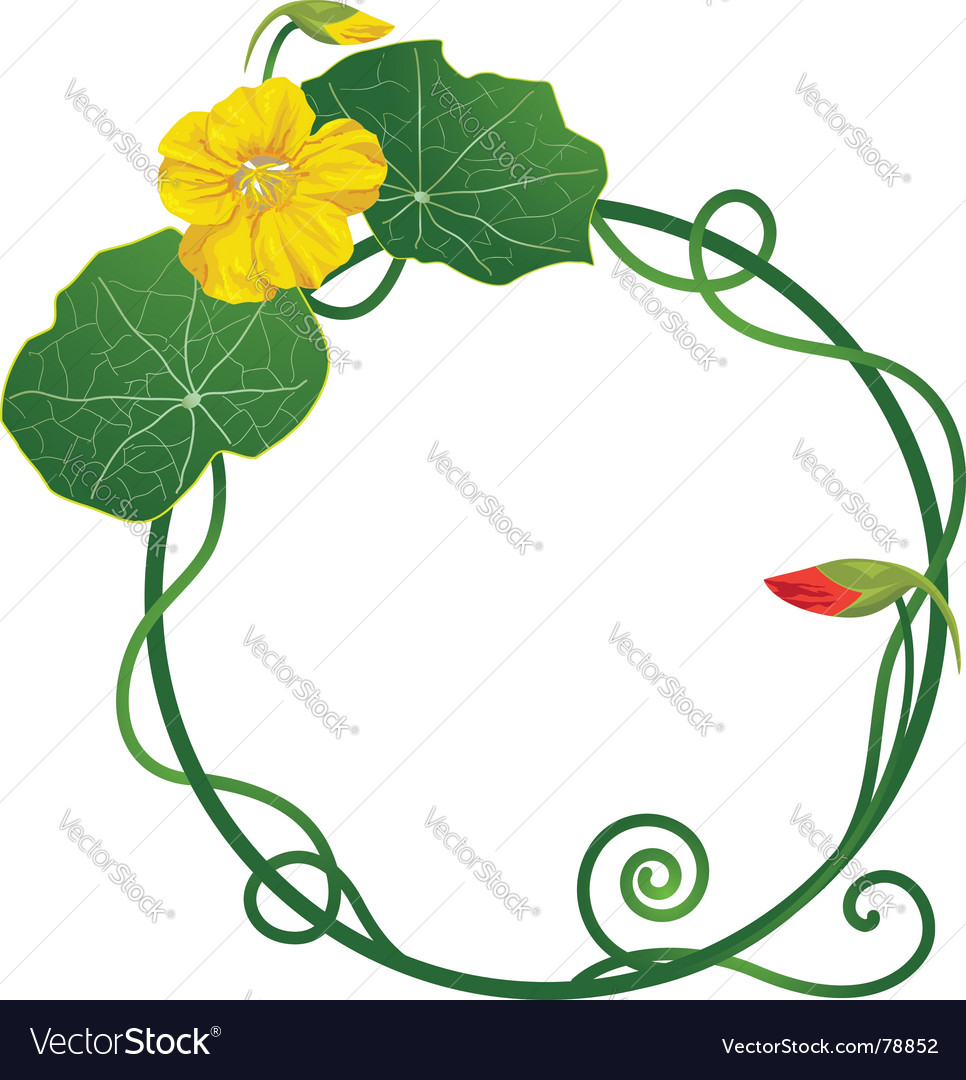 Lily pad frame vector