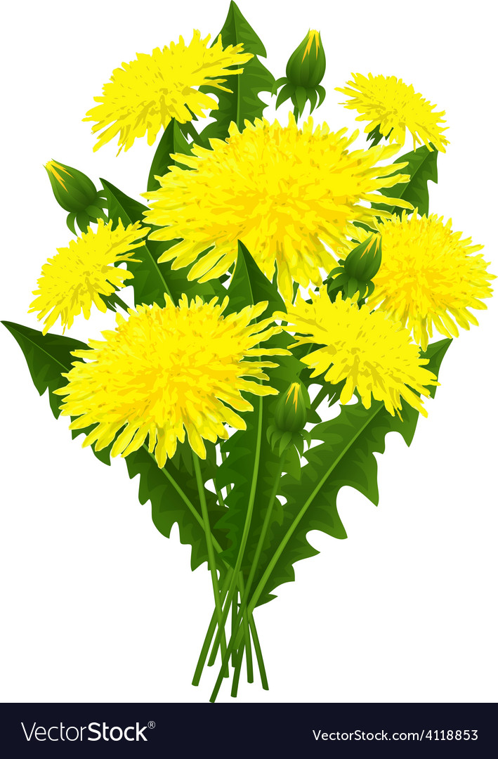 Bouquet of flowers dandelion vector | Price: 3 Credit (USD $3)