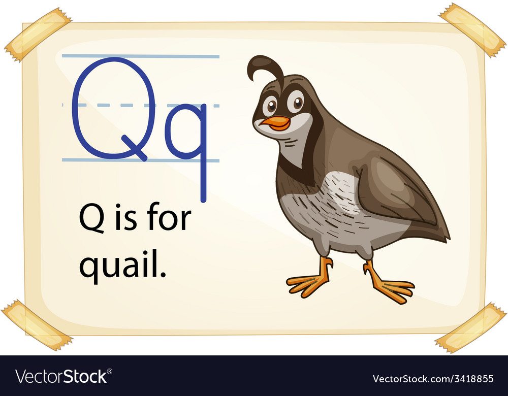 A letter q for quail vector | Price: 1 Credit (USD $1)