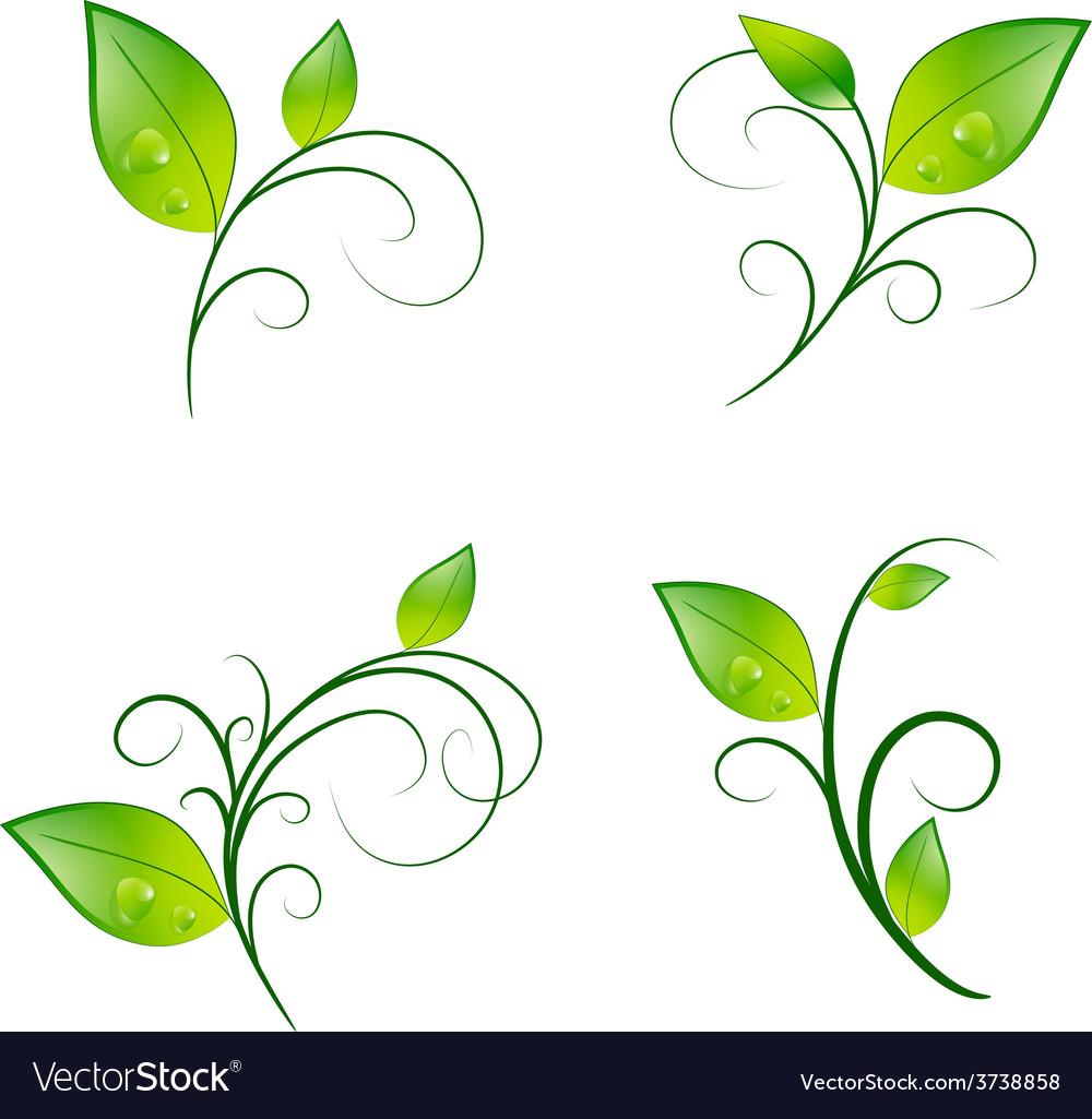 Leaf floral decoration eco set vector | Price: 1 Credit (USD $1)