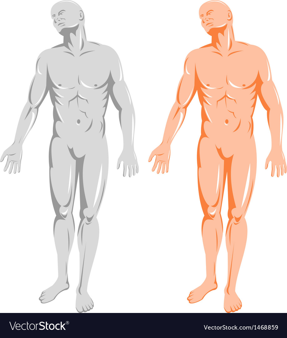 Male human anatomy standing vector | Price: 1 Credit (USD $1)