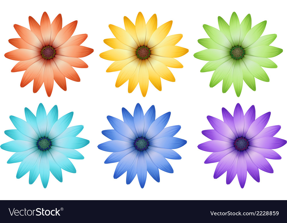 Six colorful flowers vector | Price: 1 Credit (USD $1)