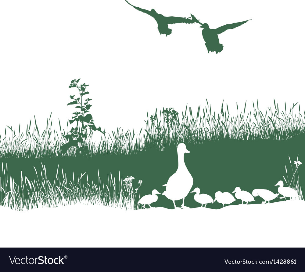 Wild duck spring vector | Price: 1 Credit (USD $1)