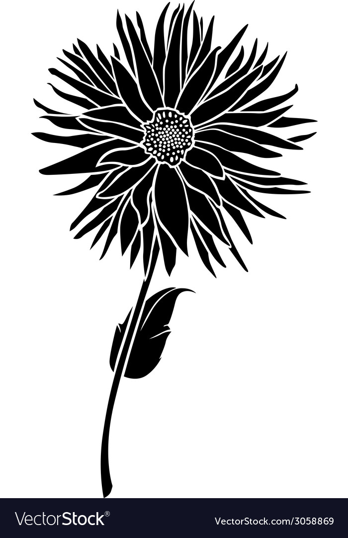 Dahlia floral vector | Price: 1 Credit (USD $1)