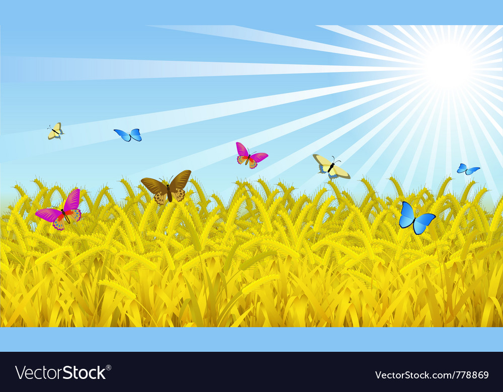 Wheat fields vector | Price: 1 Credit (USD $1)