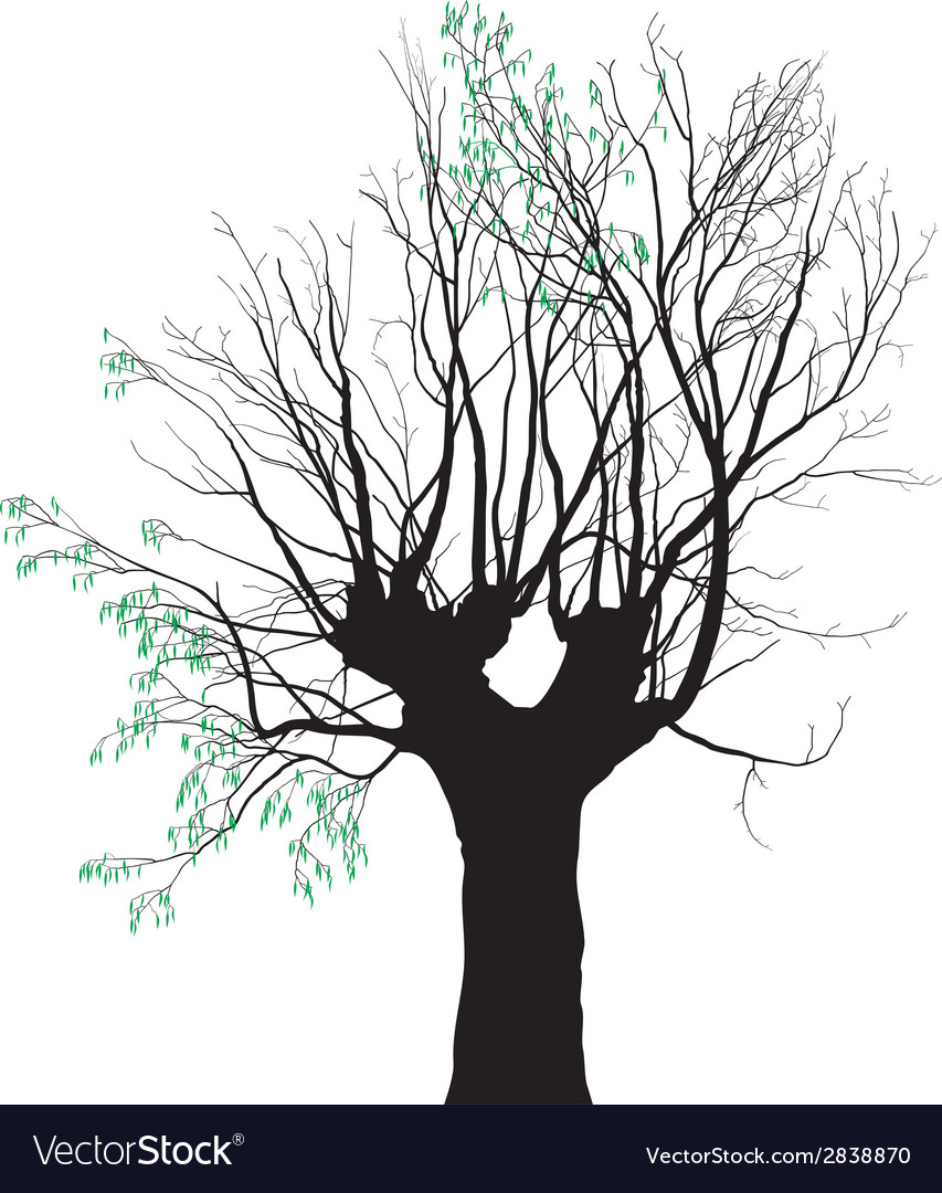 Young leaves on the old tree vector | Price: 1 Credit (USD $1)