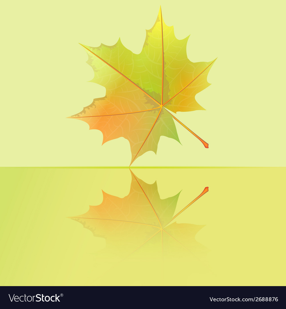 Autumn wet maple leaf falls to the puddle vector | Price: 1 Credit (USD $1)
