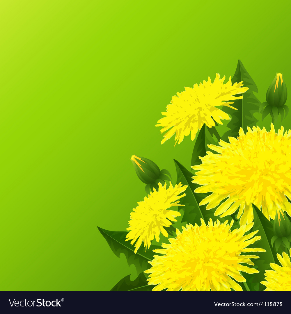 Yellow dandelion flower vector | Price: 3 Credit (USD $3)