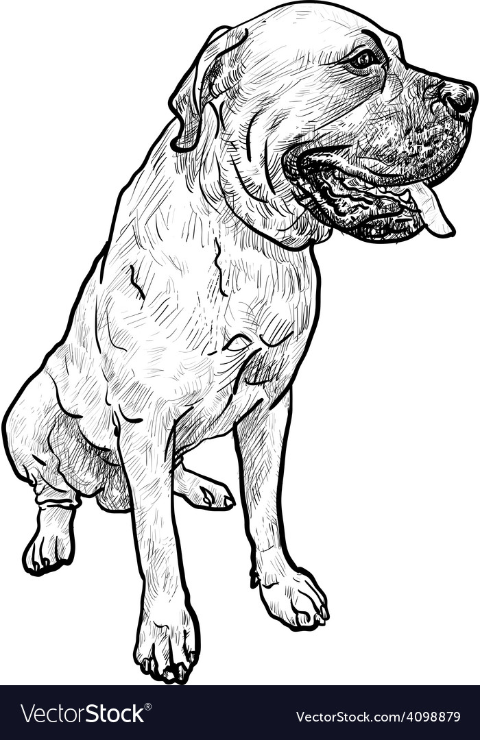 Drawing of mastiff dog on sitting pose vector | Price: 1 Credit (USD $1)