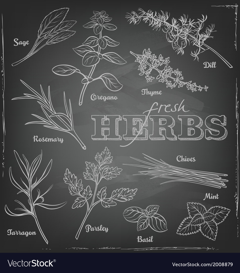 Herbs blackboard vector | Price: 1 Credit (USD $1)