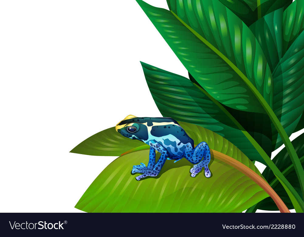 A frog above the green leaf vector | Price: 1 Credit (USD $1)