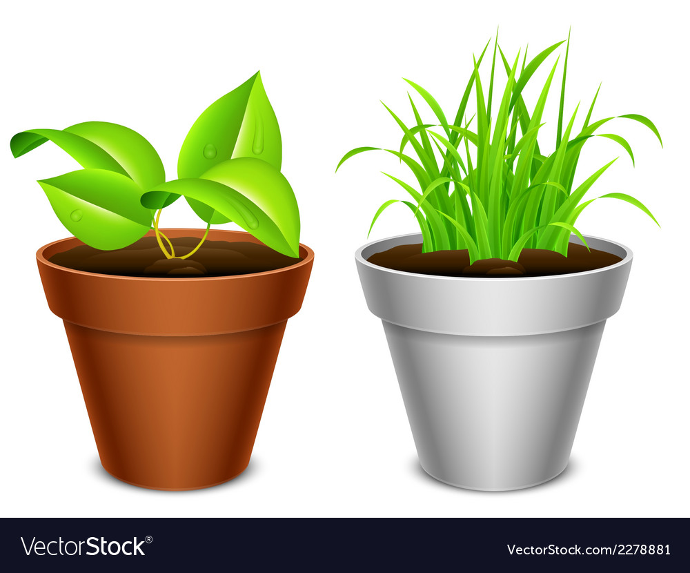 Plant in a pot vector | Price: 1 Credit (USD $1)