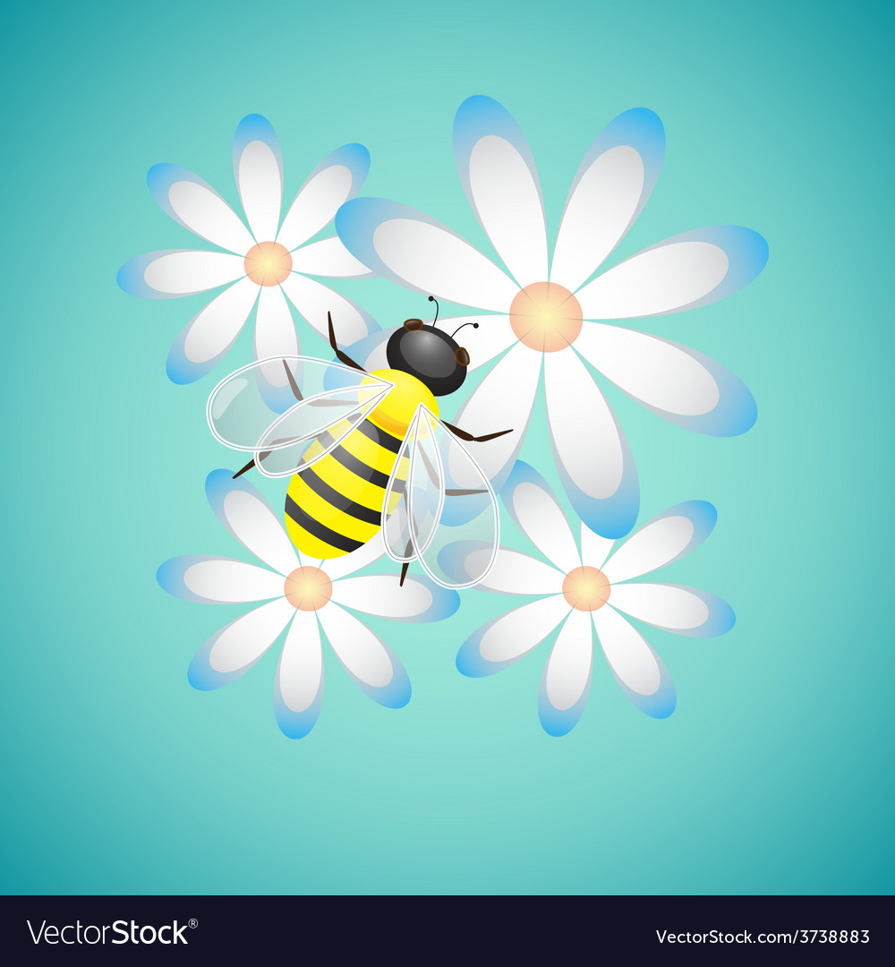 Honey bee and camomiles vector