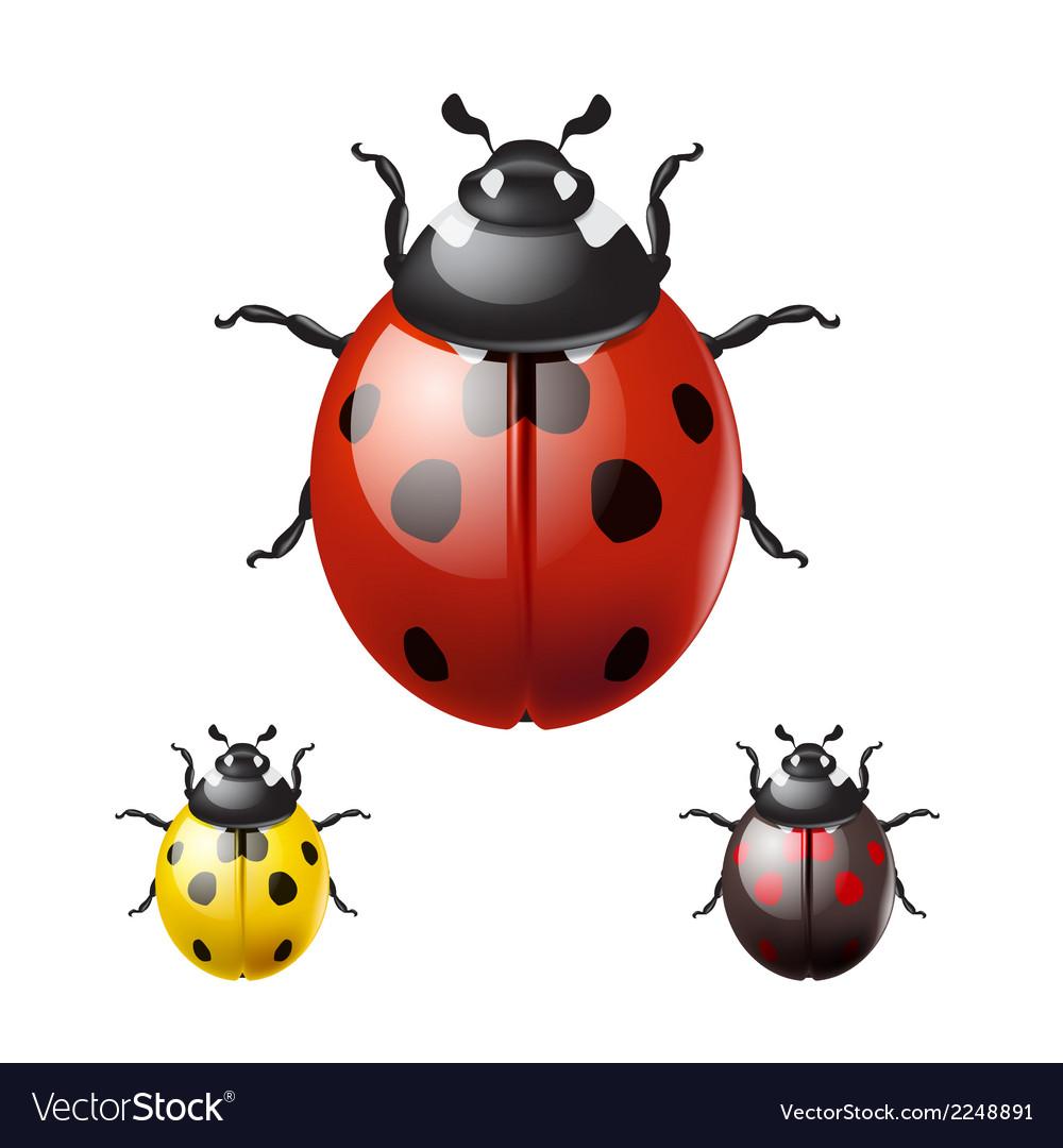 Ladybug isolated on white background vector | Price: 1 Credit (USD $1)