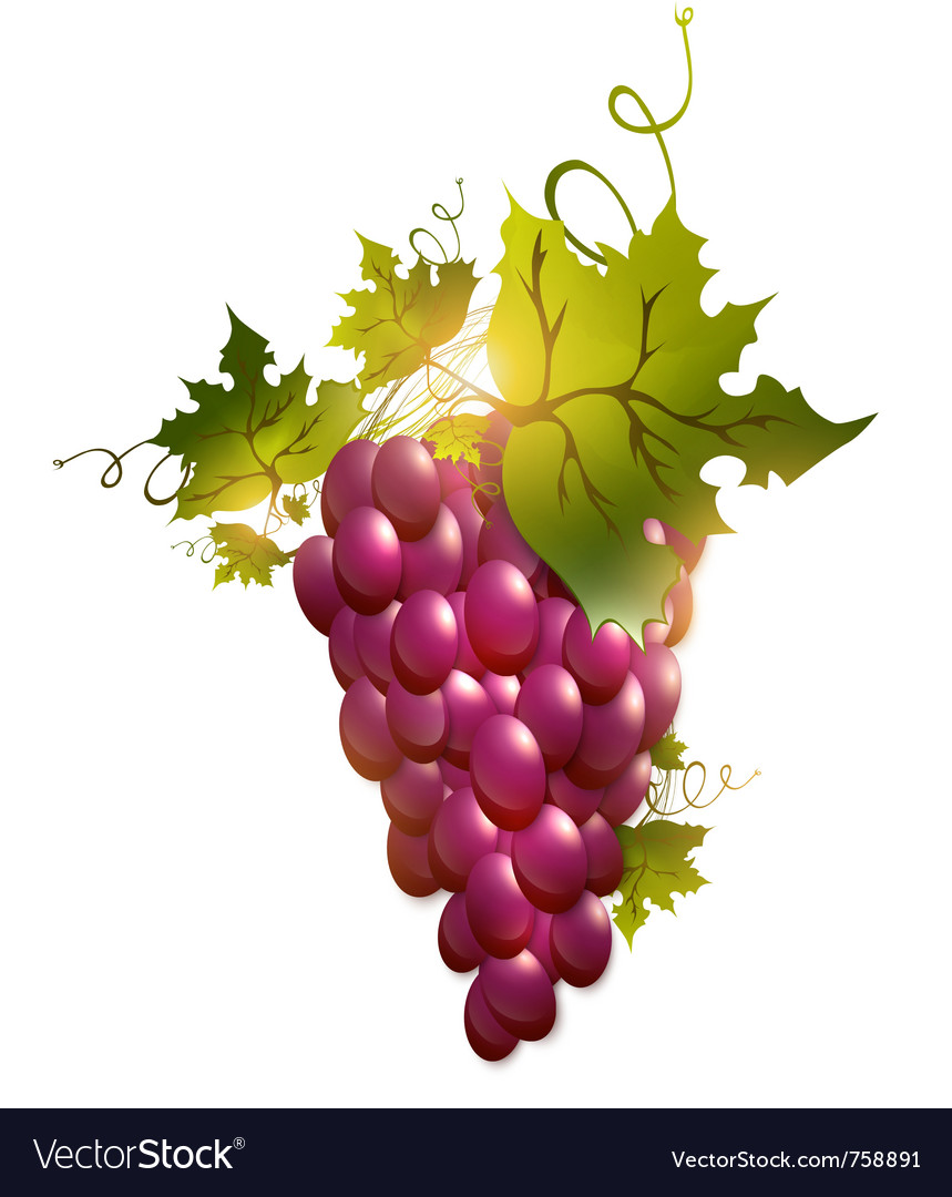 Red grape vector | Price: 3 Credit (USD $3)
