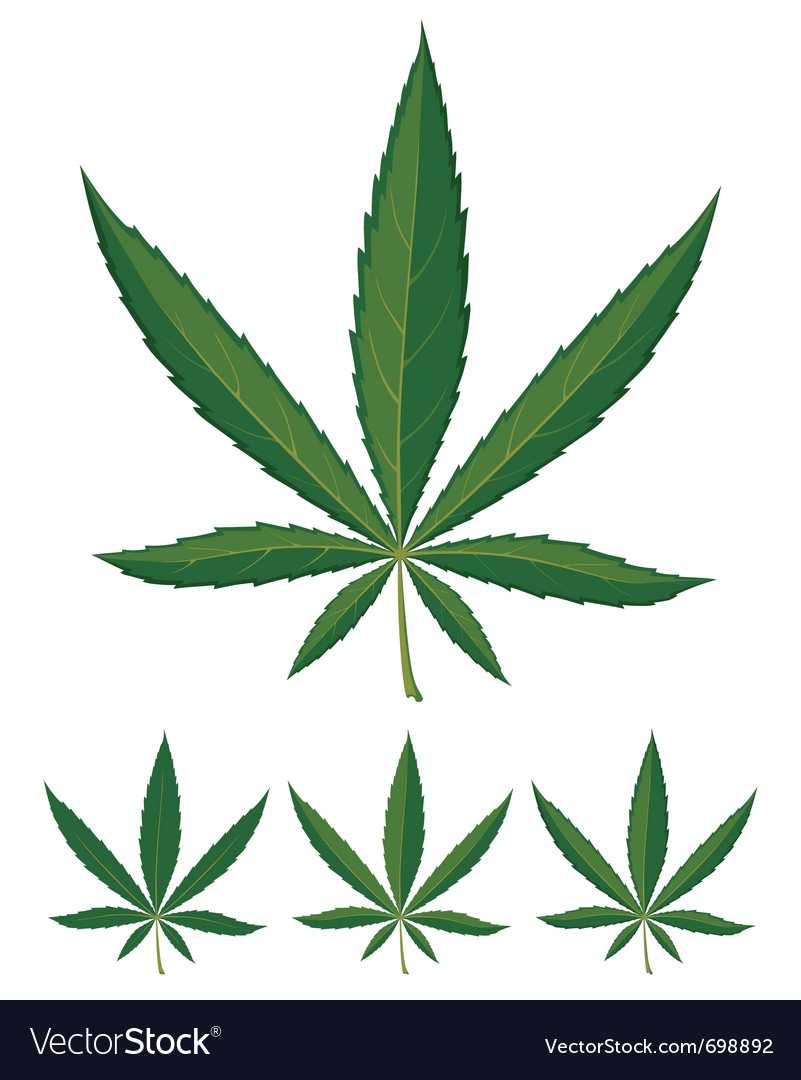 Cannabis leaves over white background vector | Price: 1 Credit (USD $1)
