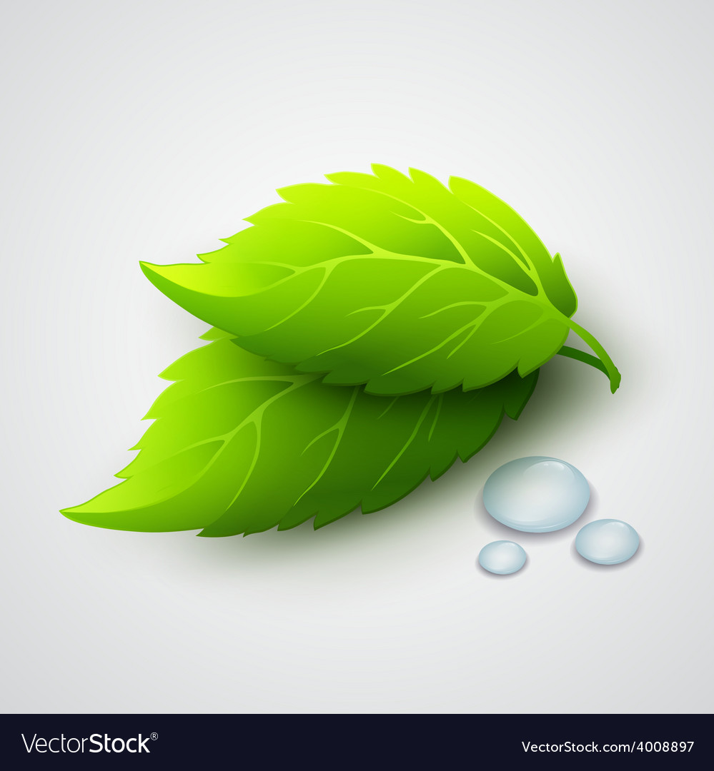Green leaves and dew drops vector | Price: 1 Credit (USD $1)