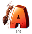 A letter a for ant vector