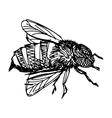 Working bee vector