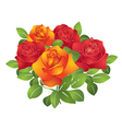 Red and orange beautiful flowers - roses vector