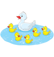 Duck and ducklings vector