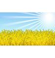 Wheat fields vector