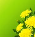 Yellow dandelion flower vector