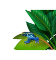 A frog above the green leaf vector