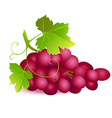 Icon of ripe summer grape with two green leaves vector
