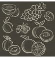 Set of fruits grapes melon apricot peach vector