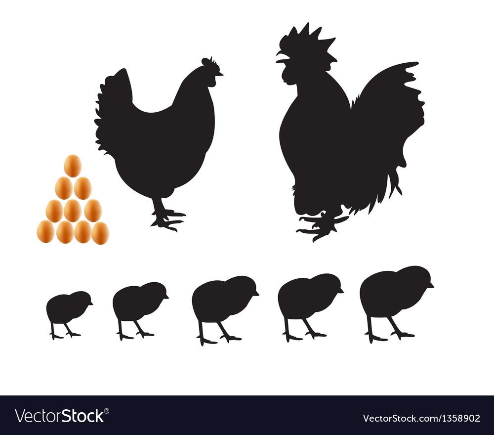 Bantam chicken chicks eggs vector | Price: 1 Credit (USD $1)