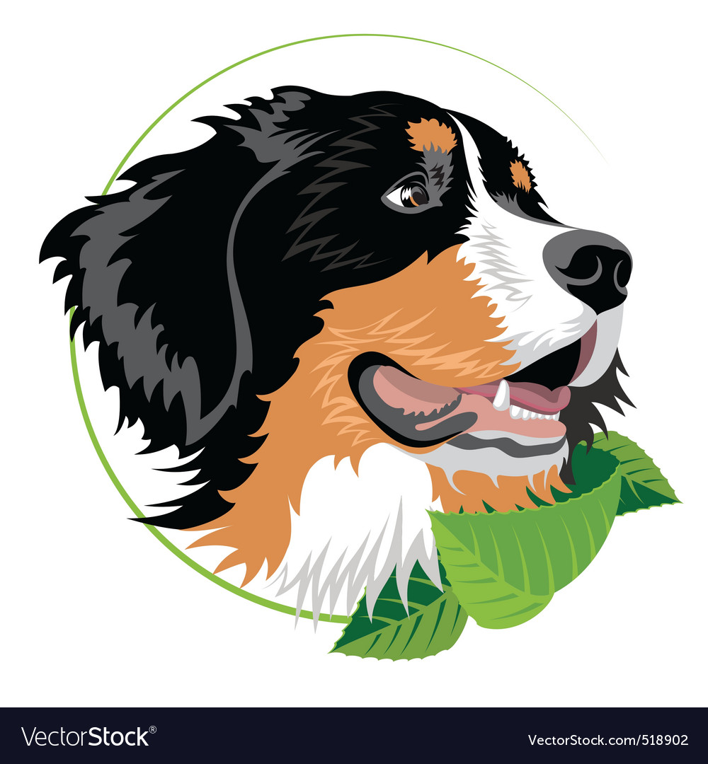 Bernese mountain dog vector | Price: 1 Credit (USD $1)