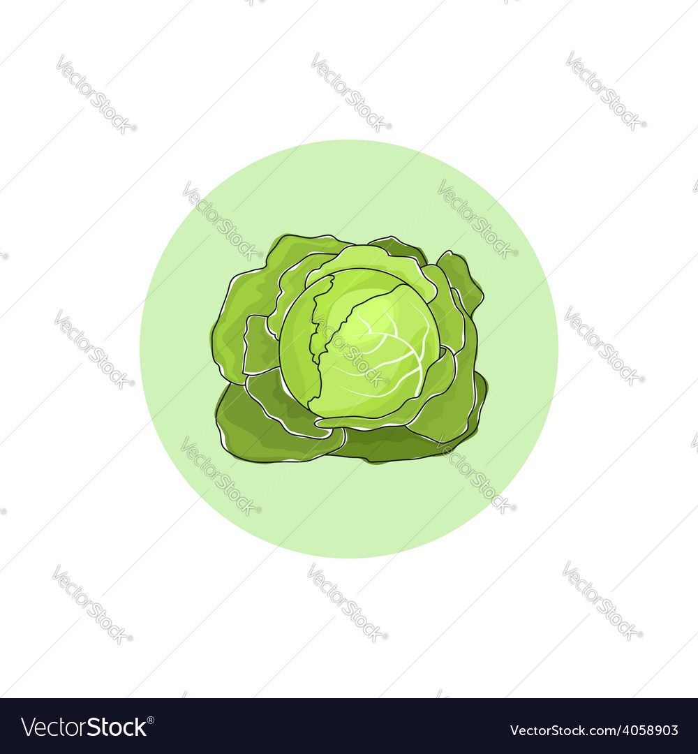 Icon white cabbage vegetable vector | Price: 1 Credit (USD $1)