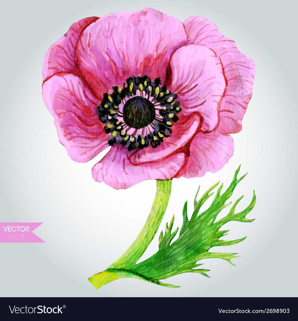 Pink anemone vector | Price: 1 Credit (USD $1)