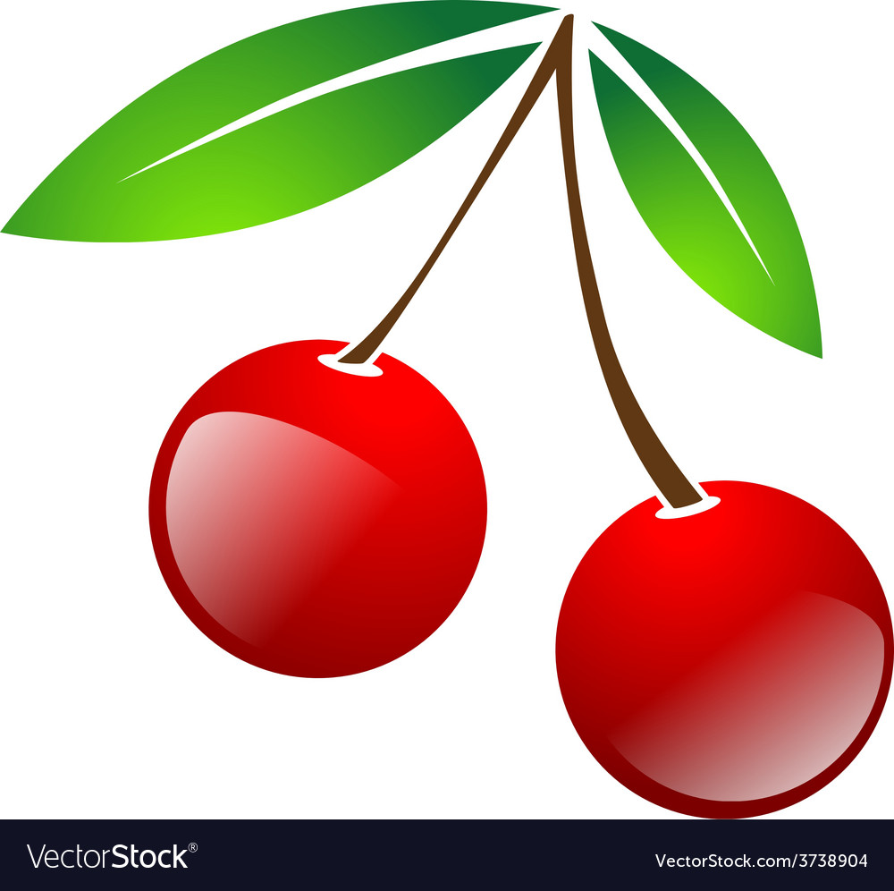 Red simple cherry berries vector