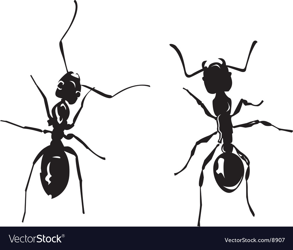 Two ants vector   Price: 1 Credit (USD $1)